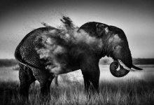 تصویر از پارک ملی پیلانسبرگ در آفریقای جنوبی