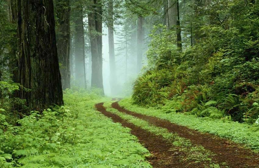 بهترین جنگل های شمال