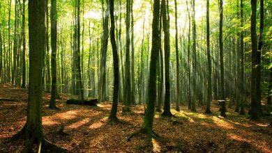 تصویر از جنگل های مازندران