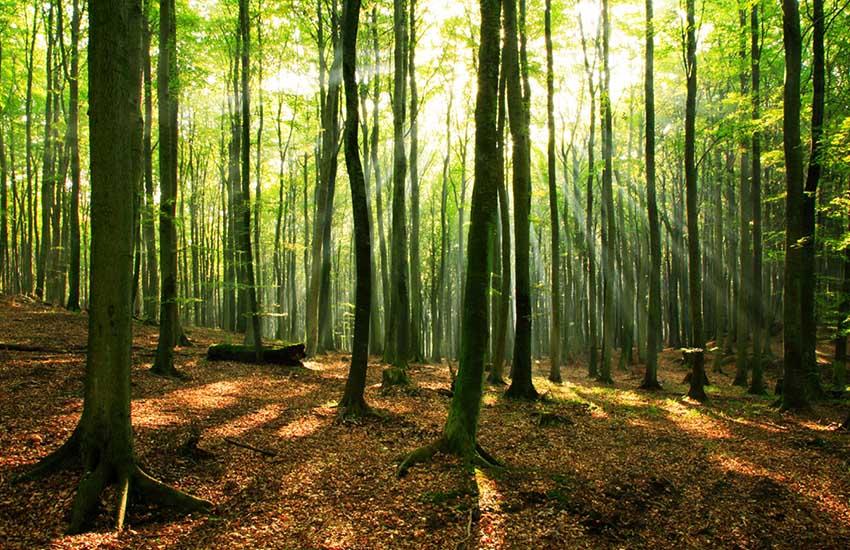 جنگل های مازندران