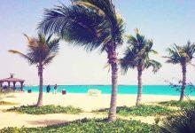 تصویر از ساحل درختان نارگیل کیش